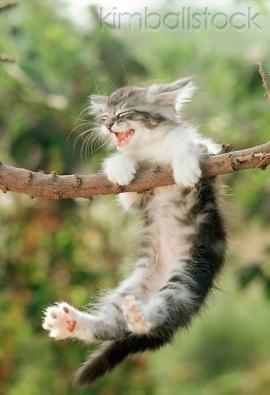 lóg a cica