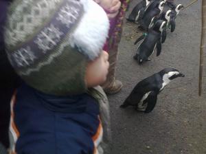 pingvinekkel